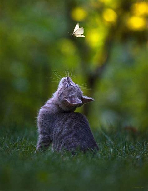 kitten watching butterfly luvbat