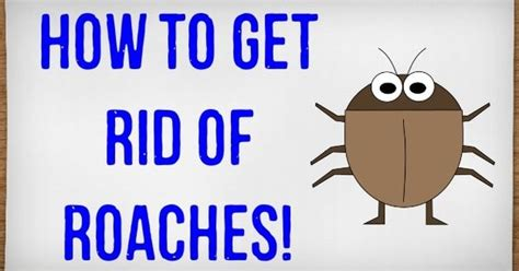 how to get rid of roaches in your house without an