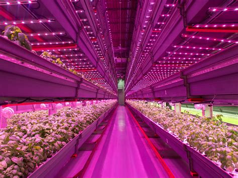 indoor farming led lights indoor vertical farm is the future of agriculture
