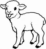 Sheep Lamb Coloring Baby Pages Cute Drawing Born Print Laughing Colouring Sheet Printable Bighorn Getcolorings Everfreecoloring Coloringsky Getdrawings sketch template