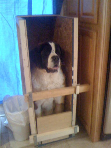 bailey chair megaesophagus uk megapaws a battle lost to canine megaesophagus what is
