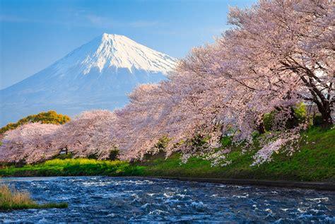 wallpaper fuji  hd wallpaper sakura river japan