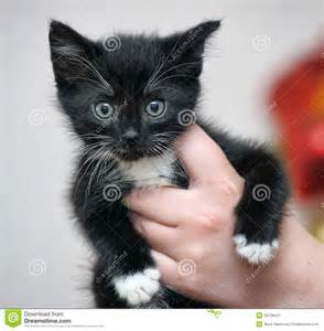 Black and White Cute Funny Kittens