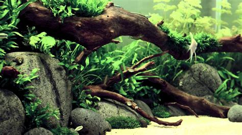 Aquascape Ada - ada style aquascape 18 days