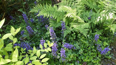 colorful perennials plan a colorful perennial garden traditional home