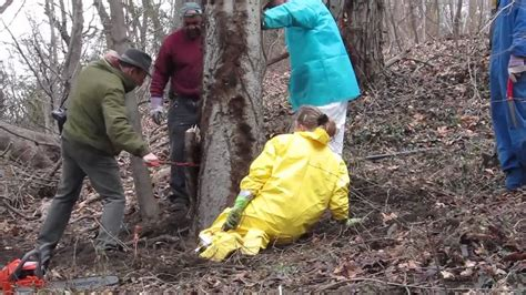 poison removal poison ivy removal fairmount park phila pa youtube