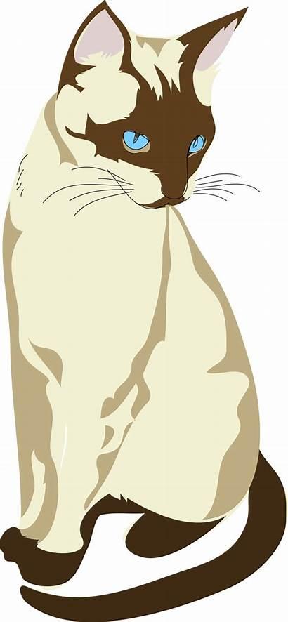 Gatto Clip Publicdomainfiles Cat Architetto Domain Siamese