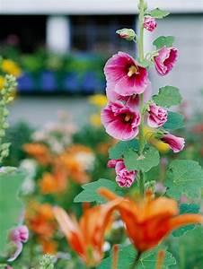 Blumen Im Garten : die sch nsten rosa blumen im garten anbauen gartengestaltung ~ Bigdaddyawards.com Haus und Dekorationen