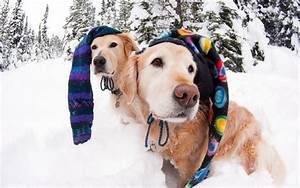 Keeping your dog safe this winter season for Best dog door for winter