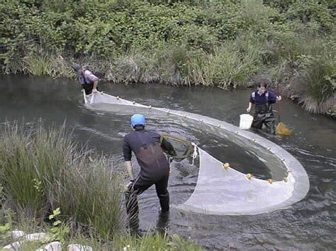seine fishing wikipedia