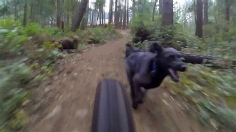 gopro ari dog mountain biking youtube