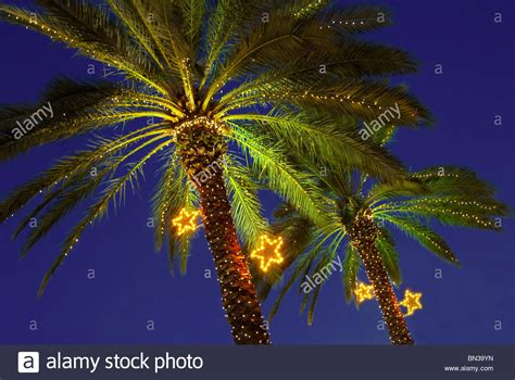 during christmas season palm trees are decorated with