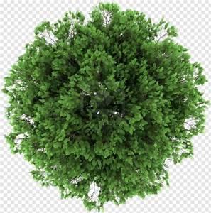 Tree, Plan, -, Photoshop, Tree, Plan, Png, Png, Download, -, 368x373, 188932, Png, Image