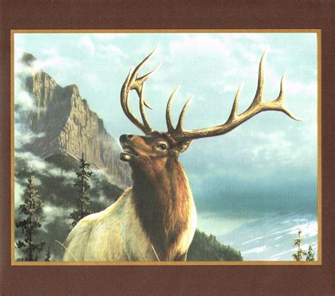 rocky mountain big horn sheep moose  elk  frames