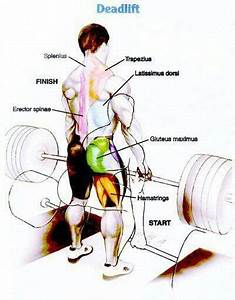 Do Standard Deadlifts Stimulate Significant Muscle Growth