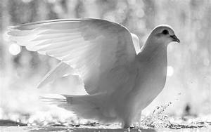 Black and White Wallpapers Animals