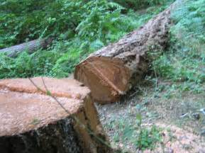 how to cut a tree apps directories