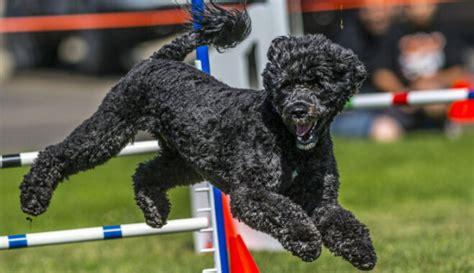 Speciālie suņu sporta veidi