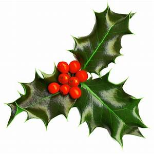 Holly Transparent background ~ Free Png Images