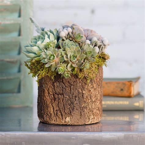 un vase avec un tronc d arbre pour d 233 corer votre int 233 rieur