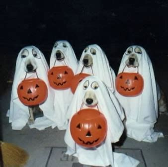 funny halloween pictures trick  treat images pics page