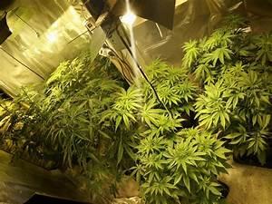 Pied De Beuh : du cannabis de haute qualit d couvert pr s de lyon 7 personnes interpell es ~ Medecine-chirurgie-esthetiques.com Avis de Voitures