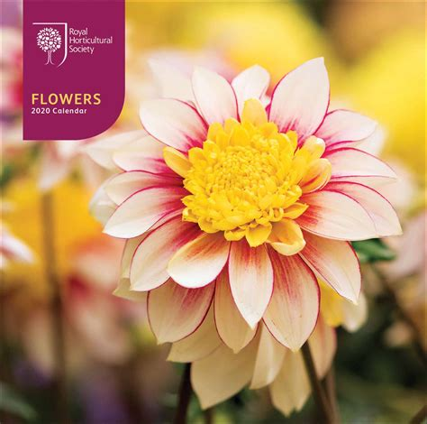 rhs flowers desk calendar calendar club uk