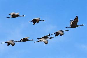 Why Do Birds Migrate? - Bird Migration