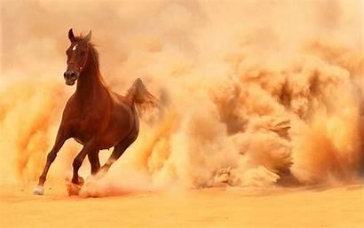 Horse Arabian Wallpapers Running Desert Storm