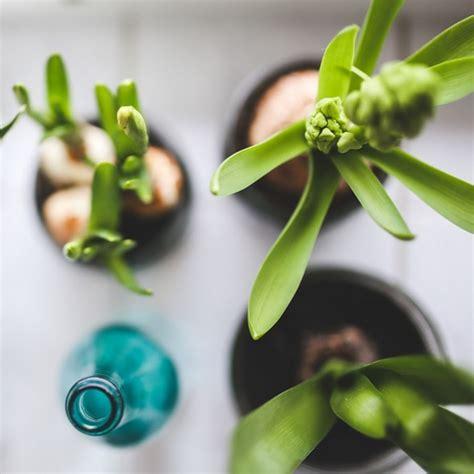 tanaman hias  hidroponik youtube