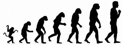 Monkeys Humans Evolved Why There Still Evolve
