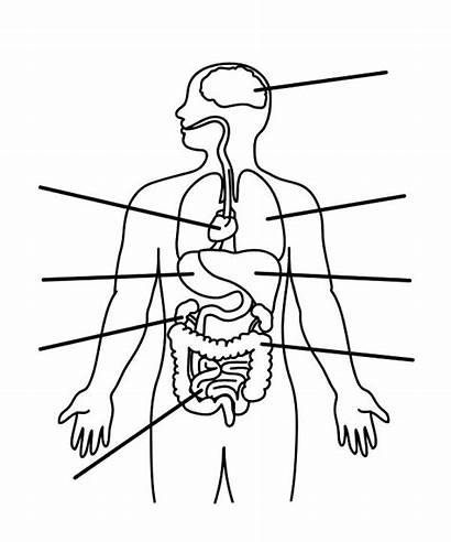 Coloring Pages Parts Human Anatomy Printable
