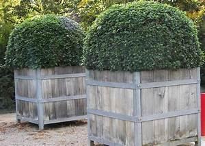 Grosse Kübelpflanzen Sichtschutz : gro e pflanzk bel winterhart kj29 hitoiro ~ Whattoseeinmadrid.com Haus und Dekorationen
