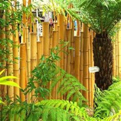 cloture en canne de bambou naturelle diam  cm