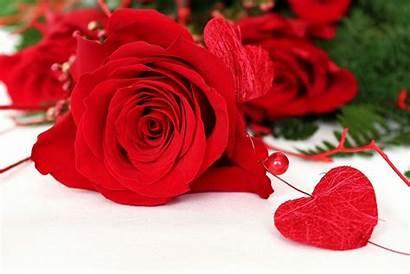 Rose Background Flower Heart Bead Close Dog