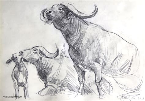 katherine roy studio museum  natural history sketches