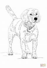 Beagle Coloring Printable Realistic Kleurplaat Cockapoo Husky Colorear Cani Colorare Tick Hound Beagles Dibujos Kolorowanka Perros Kolorowanki Running Colouring Dog sketch template