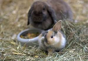 Kaninchen Tierschutzverein Gross Essen e V