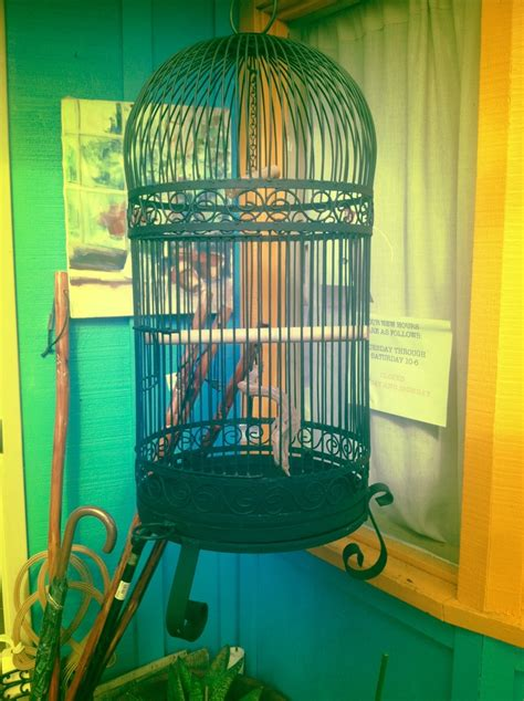 cool parrot cages 23 best images about bird cages on pinterest quails bird houses and vintage wood