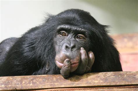 minds    animal intelligence california