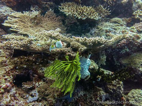 great barrier reef hawkebackpackingcom