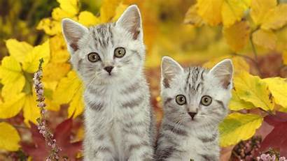 Cats Cat Laptop Wallpapers Desktop Mobile Wallpapertag