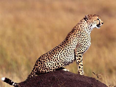 Pasaules apdraudētie dzīvnieki. - Spoki