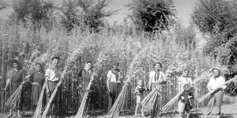 canapé ée 50 abbigliamento ecologico in canapa natuarale