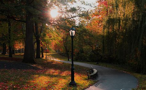 wallpaper  york city usa nature autumn parks bench