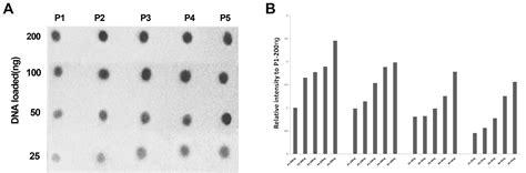 mc dot blot assay quantifying  dna methylation