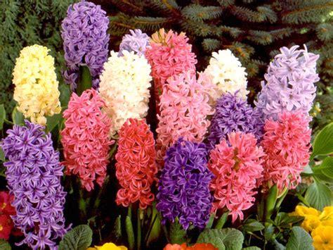 top ideas to plant bulk flower bulbs in landscape