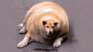 Obessy Fattest Animals Ever - YouTube