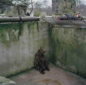 The Sadness Of Zoo Animals, In One Photograph - The Dodo
