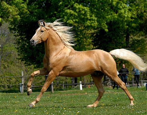cheval beige au galop  heart  horse